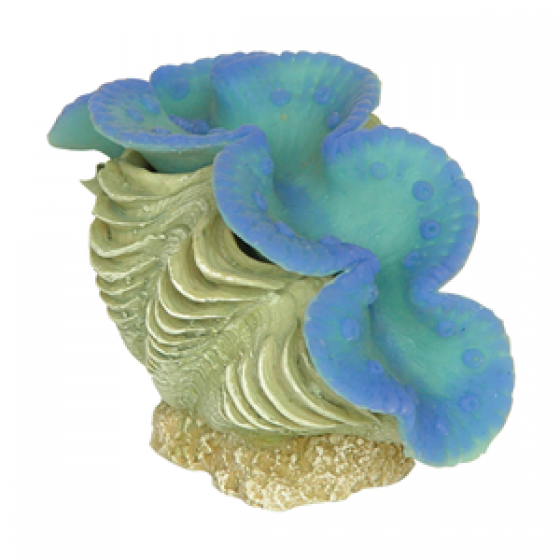 159217 Clam Coral 9x4x6 cm